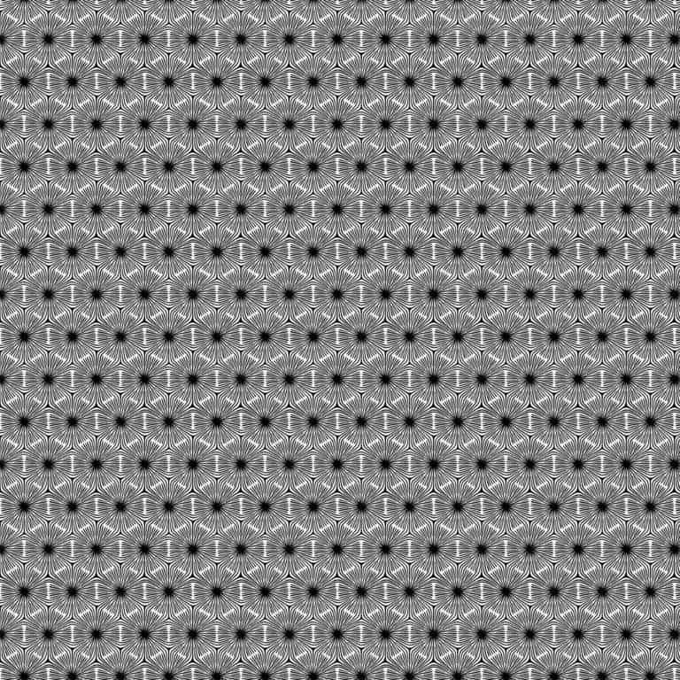 23916/ 99 - White/Black