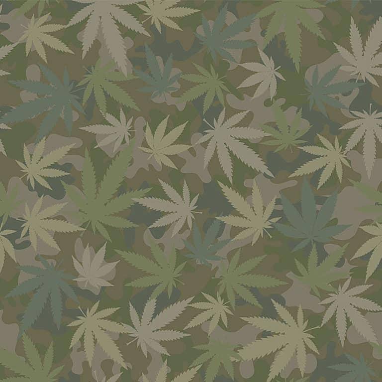 1725/ Grass